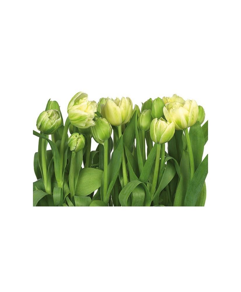 Painel decorativo Tulips