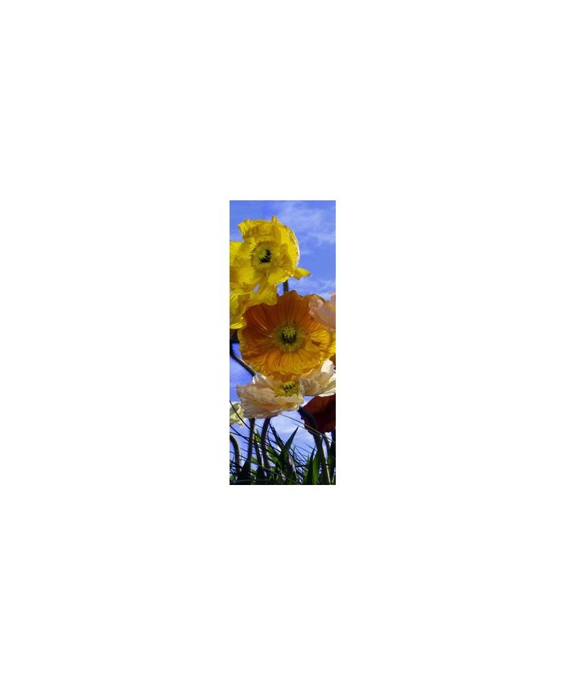 Painel decorativo Poppy 1